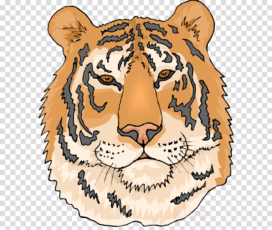 coloring pages of tigers clipart Bengal tiger Clip art