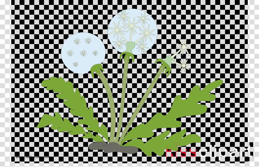 Dandelion clipart Common Dandelion Petal Plants