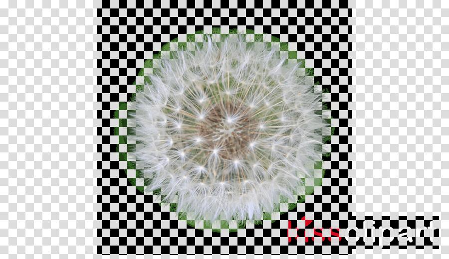 dandeliom png clipart Clip art