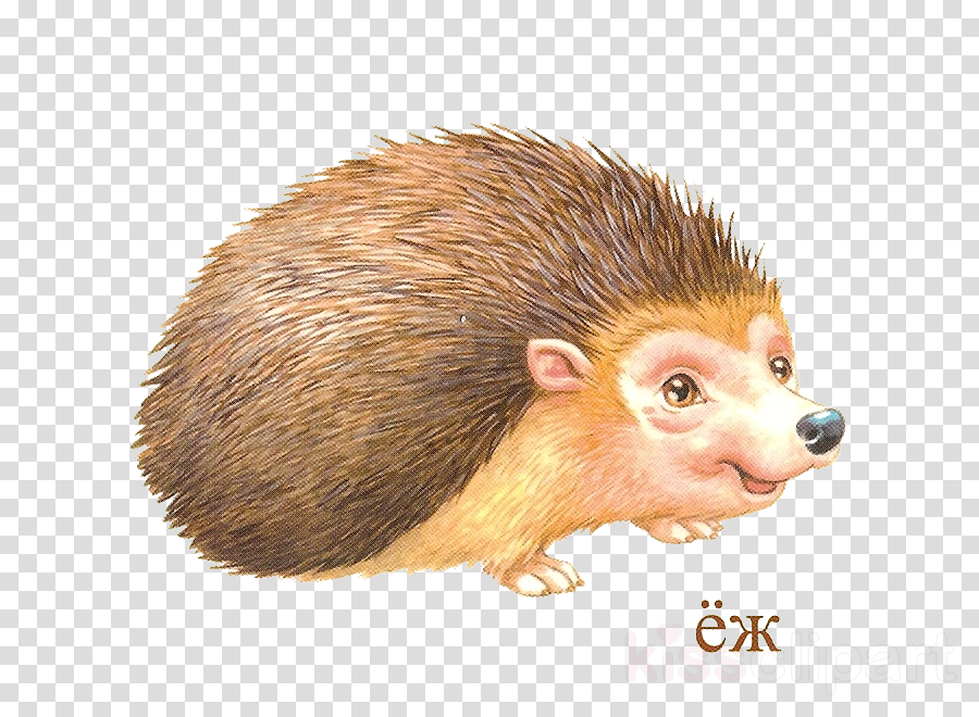 ежик мультяшный clipart Domesticated hedgehog Porcupine