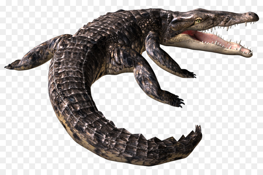 american alligator clipart American alligator Nile crocodile