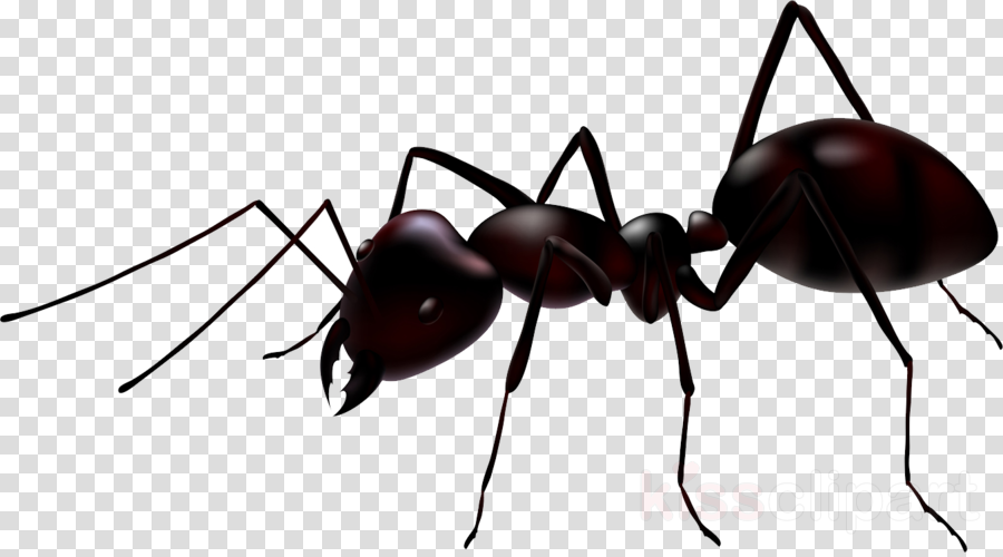 ant vector clipart Ant Clip art