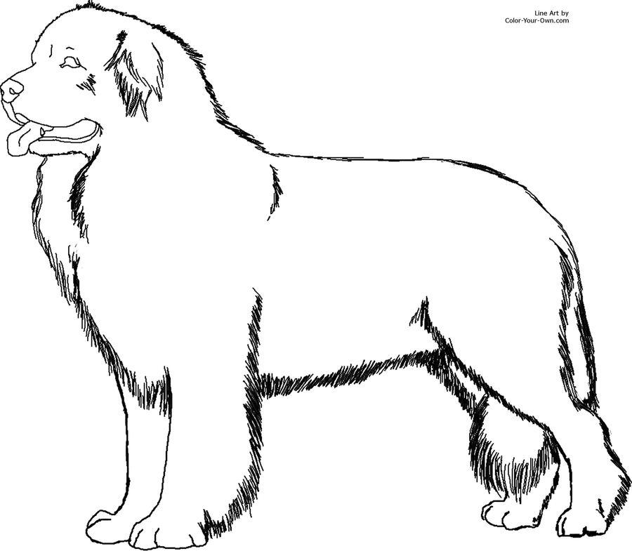 puppy drawing illustration dog line wildlife art sketch png