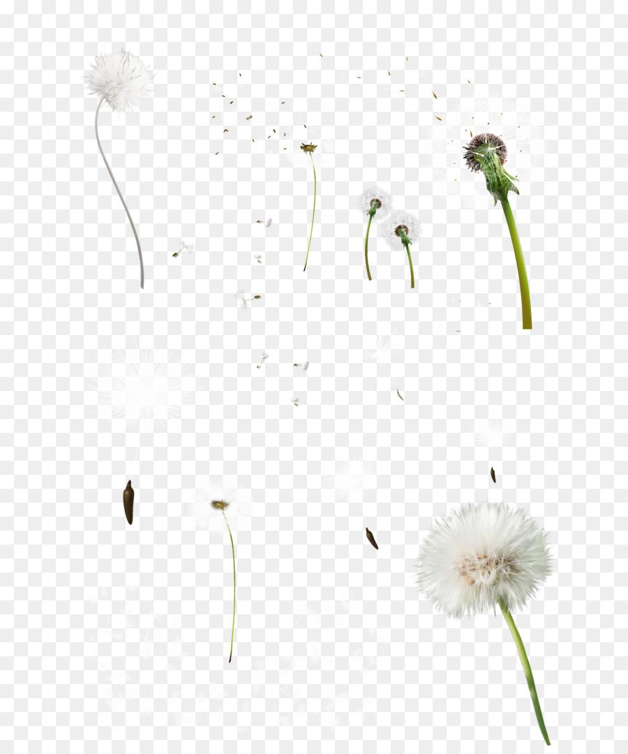 Dandelion Background