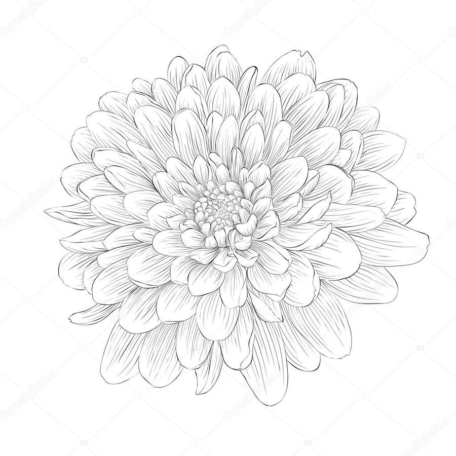 Download Black And White Clipart Black And White Dahlia Dahlia