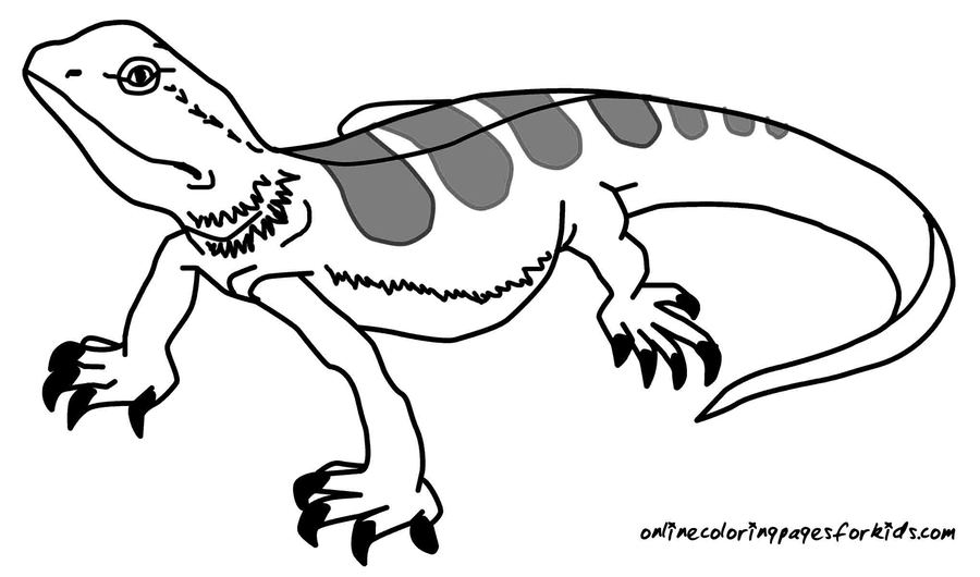 Download lizard coloring page printable clipart Lizard Colouring ...