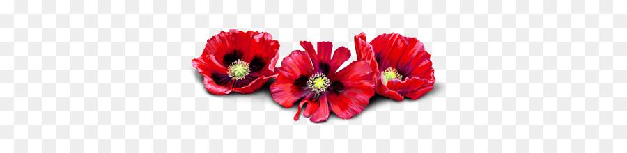 Download anzac poppy flower transparent clipart common poppy opium poppy mightylinksfo