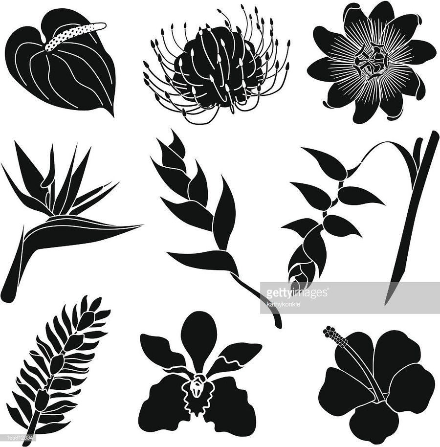 Download Tropical Flowers In Black And White Clipart Tropics