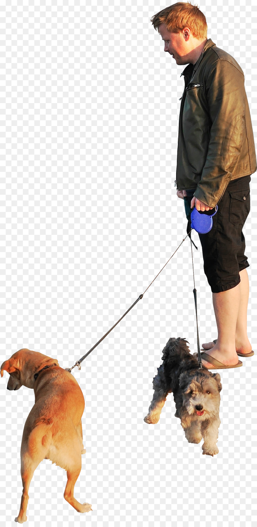 person walking dog png clipart Dog walking