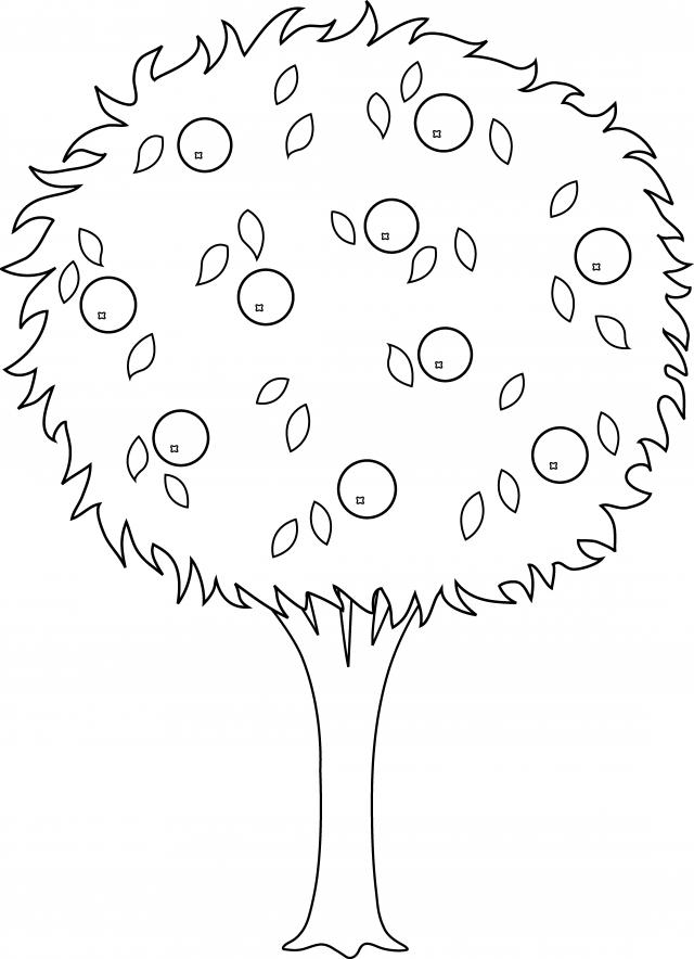 Orange Tree Drawing Transparent Image Clipart Free Download