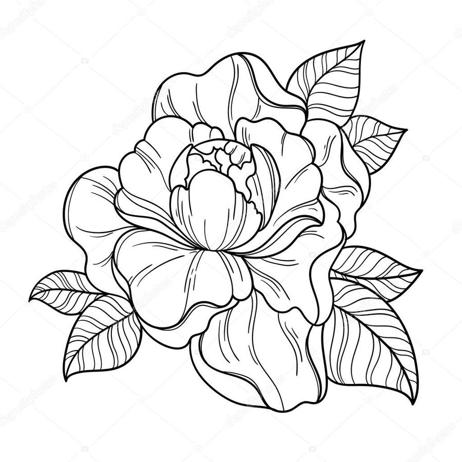 Download Peony Black And White Vector Clipart Floral Design Drawing