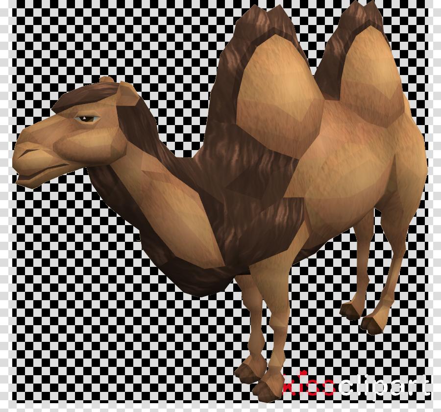 arabian camel clipart Dromedary Bactrian camel Clip art