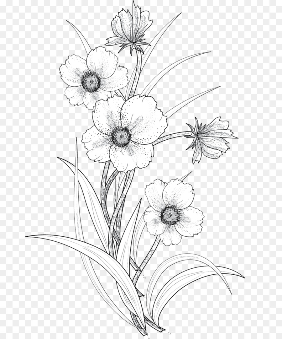 Drawings of flowers transparent. Black and white flower