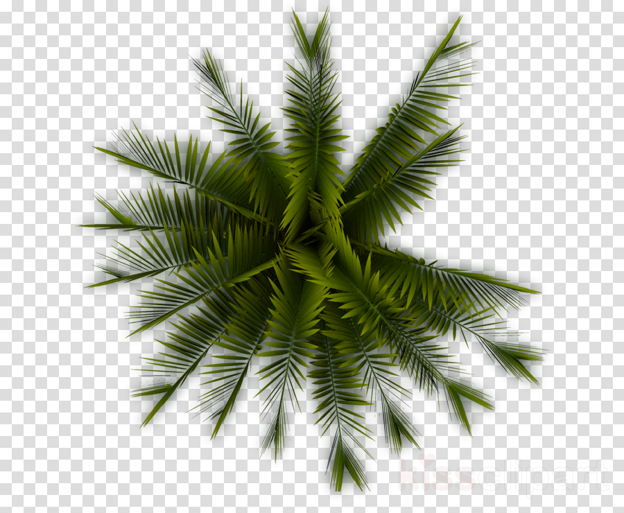 Tree Coconut Leaf Transparent Png Image Clipart Free Download