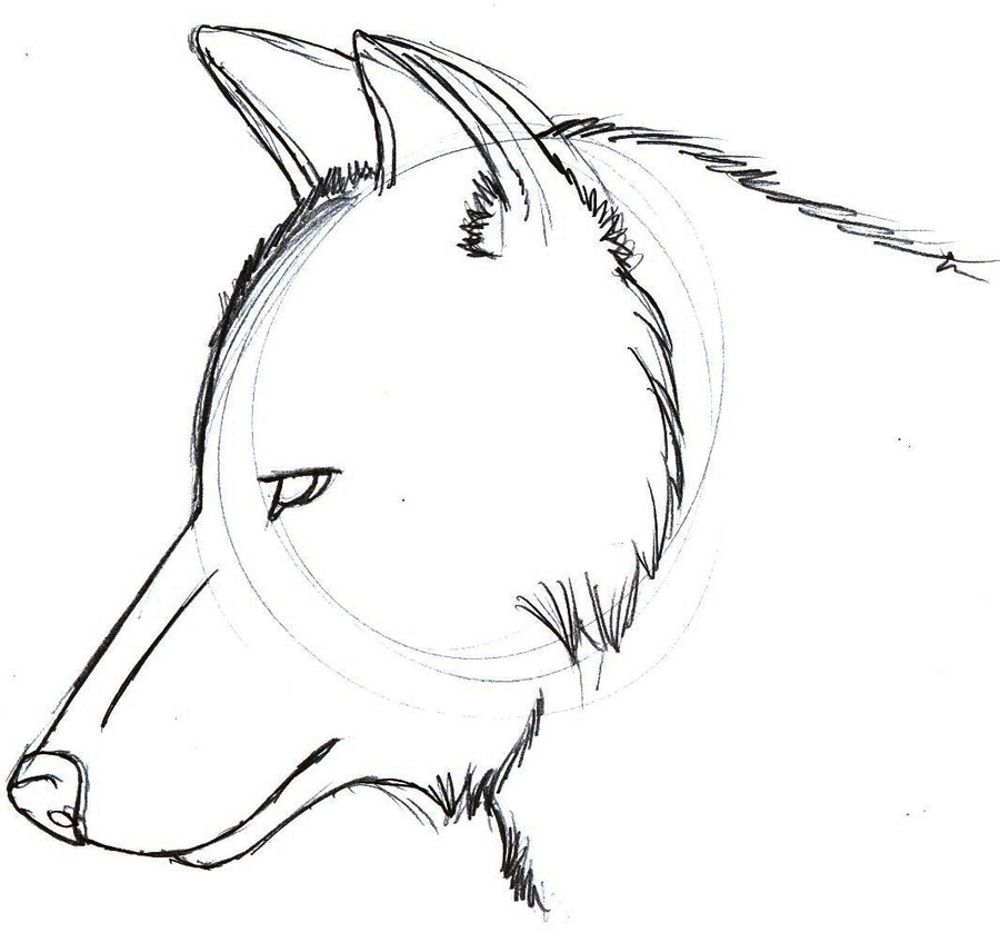 download easy drawing of a wolf head clipart wolf drawing sketch