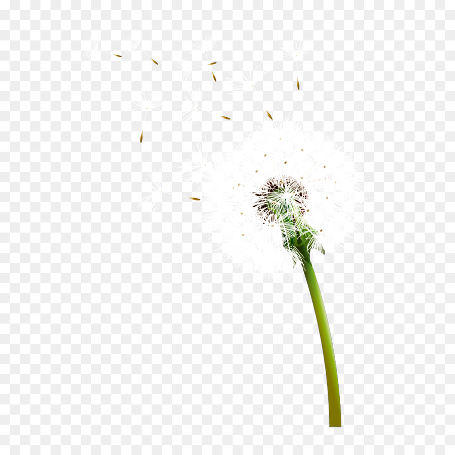 dandelion seed png clipart Seed Common Dandelion