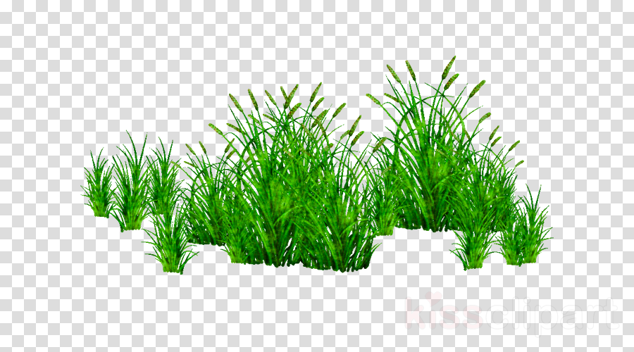 grass clip art free clipart panda free clipart images - 900×500