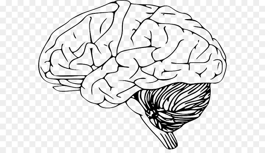 brain outline clipart Human brain Clip art
