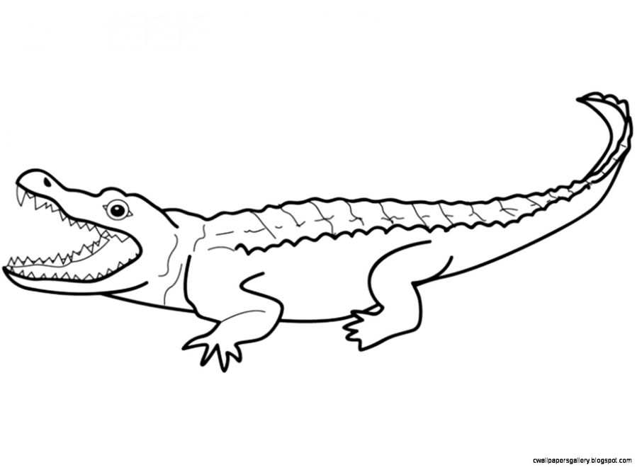Download alligator coloring pages clipart Alligators Crocodile ...