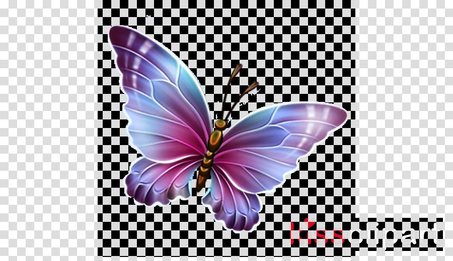 transparent butterfly clipart Glasswing butterfly Clip art