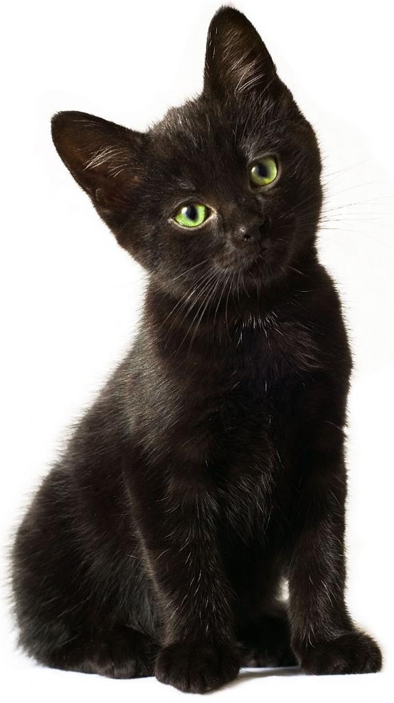 Cat Cartoon clipart - Kitten, Puppy, Cat, transparent clip art