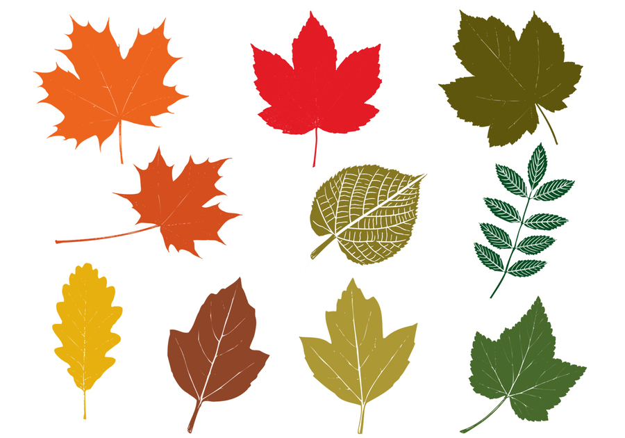 autumn leaf design tree plant pattern line png clipart free
