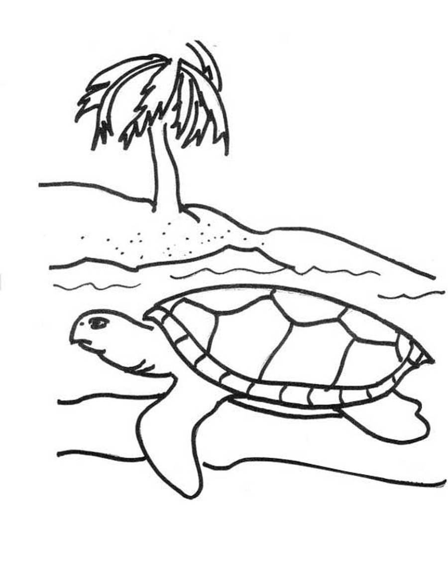 Download turtle beach coloring page clipart Sea turtle Coloring book ...