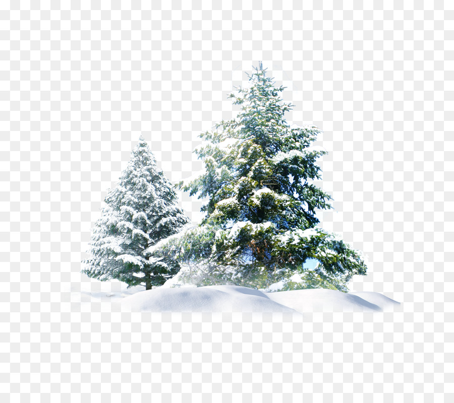 Christmas Trees Png.Christmas Tree Snow Clipart Pine Snow Tree Transparent