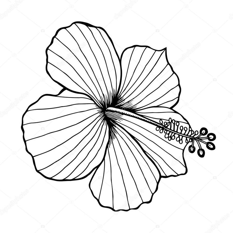 Download black and white hibiscus flower clipart floral design clip black and white hibiscus flower clipart floral design clip art izmirmasajfo