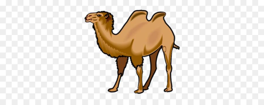 arabian camel clipart Dromedary Wildlife Clip art