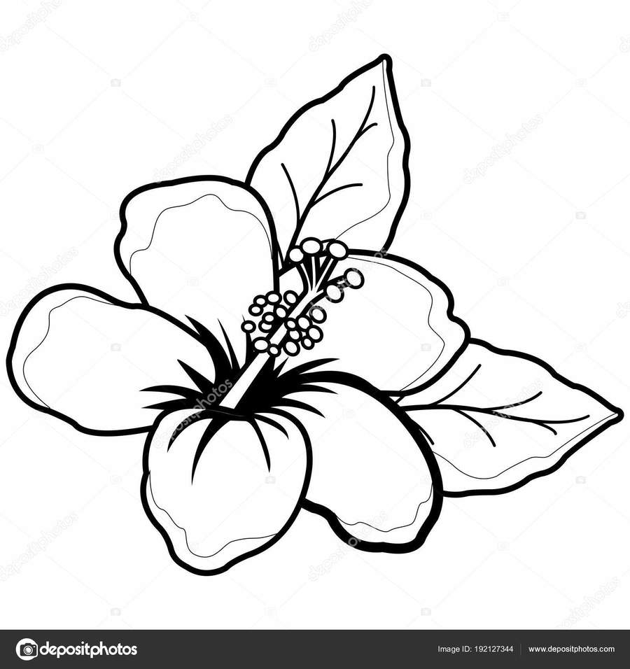 Download black and white hibiscus clipart rosemallows hawaiian black and white hibiscus clipart rosemallows hawaiian hibiscus clip art izmirmasajfo