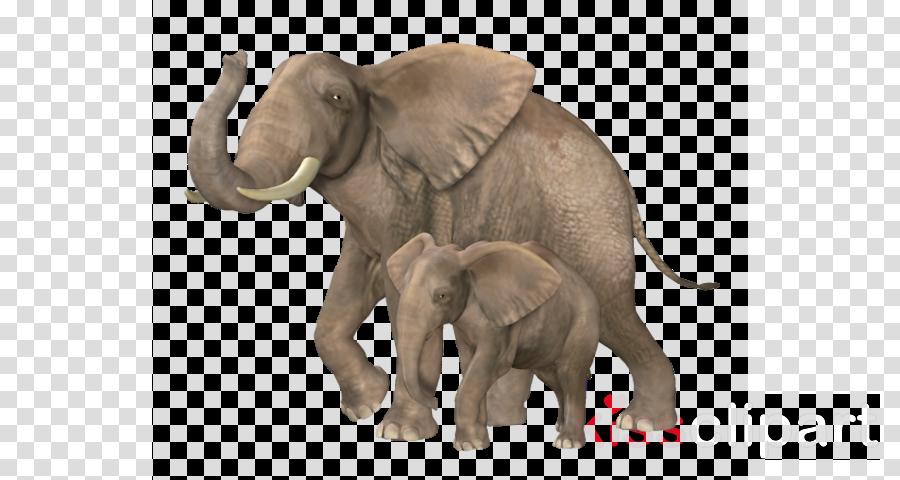 IMG clipart Indian elephant African elephant Elephants