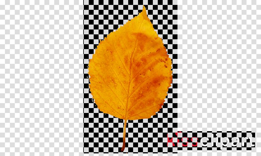autumn leaf yellow clipart Autumn leaf color Clip art
