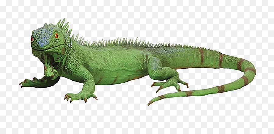 green iguana png clipart Lizard Reptile Green iguana