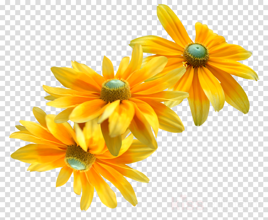 orange clipart Chrysanthemum Flower