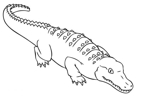 Download alligator coloring pages clipart Crocodile Coloring ...
