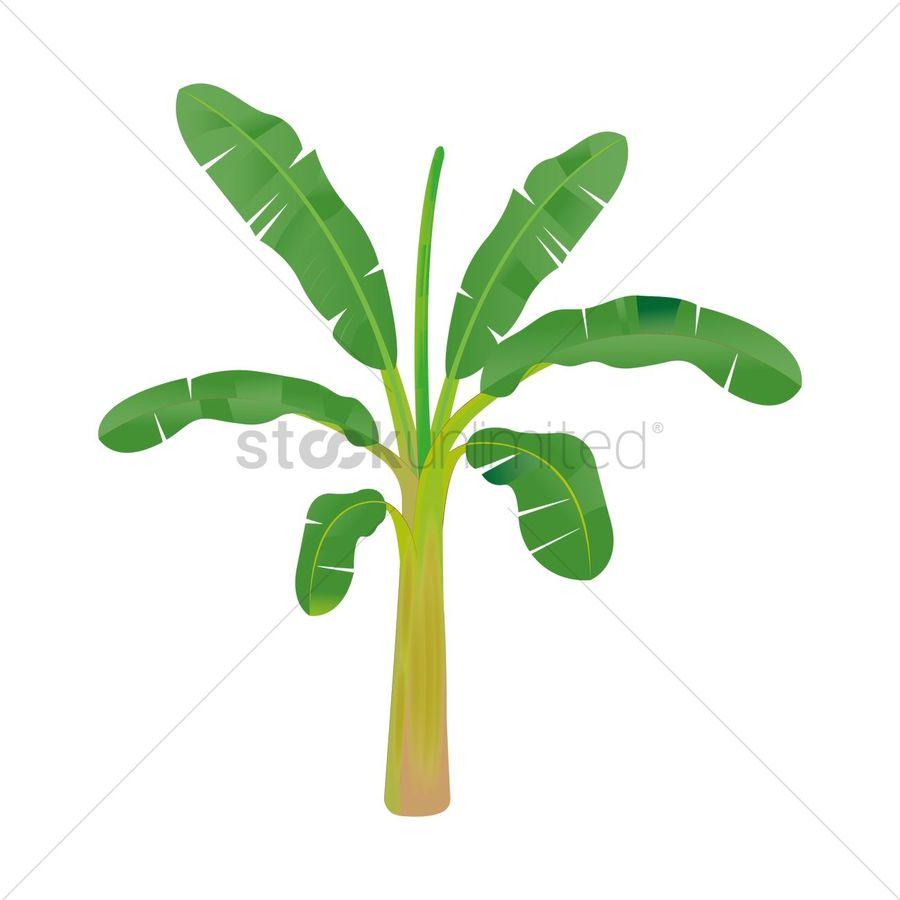 Banana Drawing Illustration Leaf Plant Hand Tree Grass Png