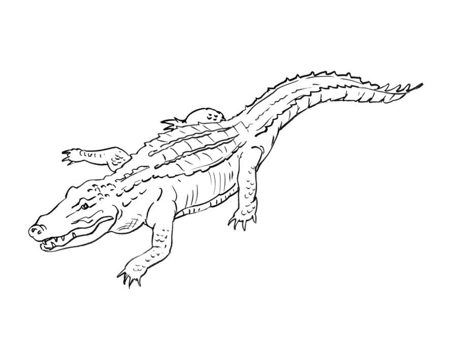 Download coloriage du crocodile clipart Crocodile Coloring book Drawing