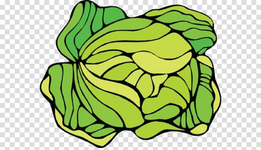 love cabbage clipart Cauliflower Cabbage Clip art