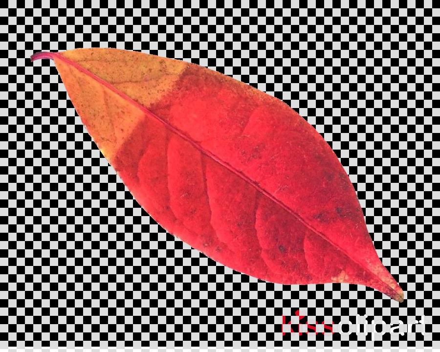 png leaf autumn clipart Autumn leaf color