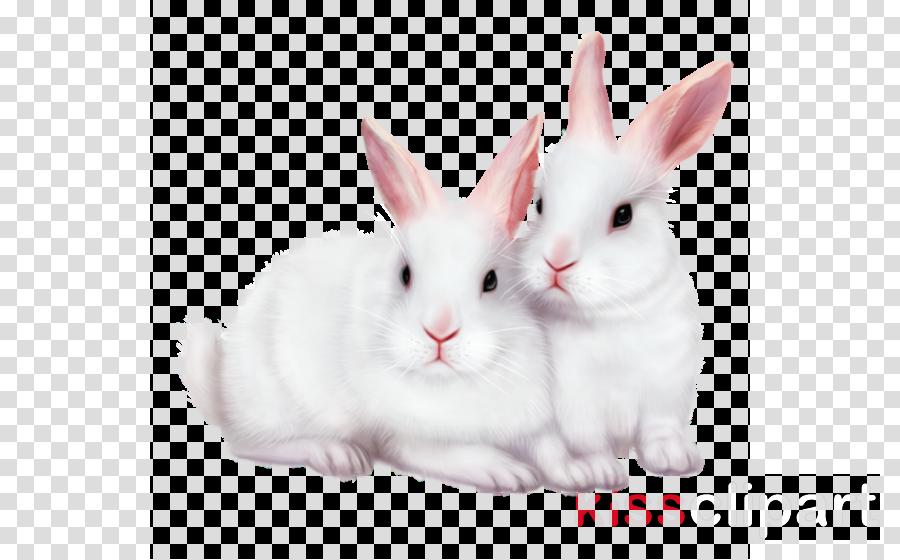 domestic rabbit clipart Domestic rabbit Hare