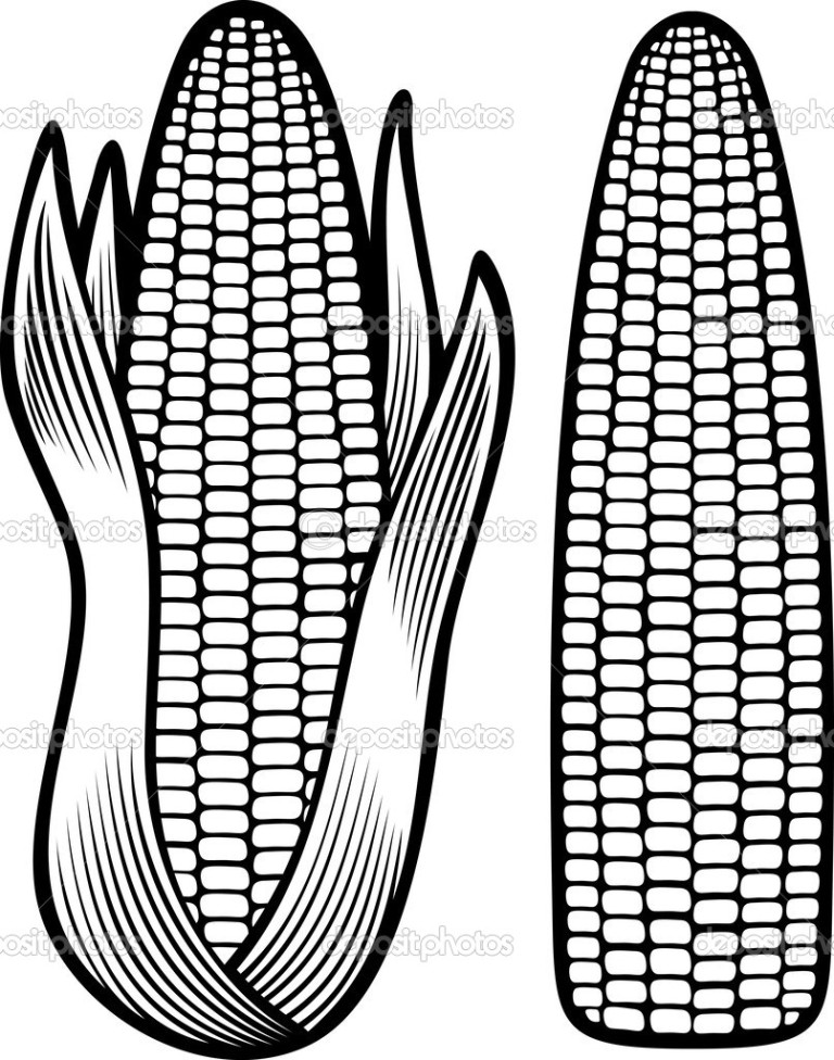 Clipart Resolution 768 976 Corn Cob Coloring Page Clipart Corn On