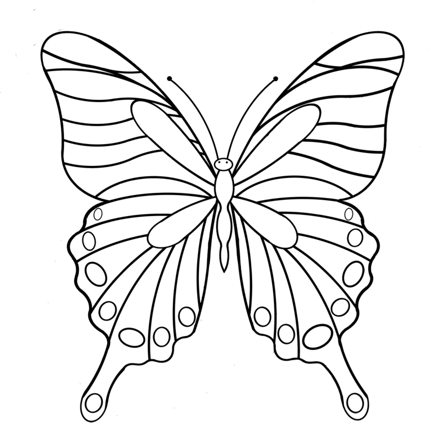 Butterfly black and white clipart butterfly drawing