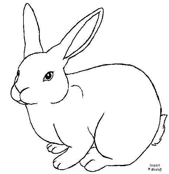 Drawing Rabbit Sketch Transparent Image Clipart Free Download