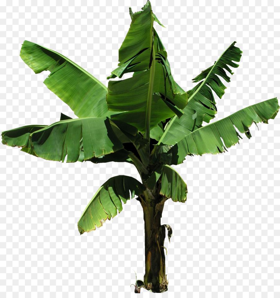 Banana Leaf Clipart Png