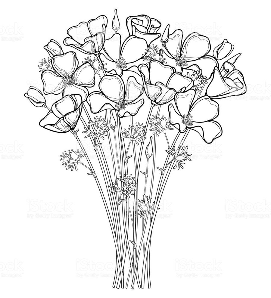 Download California Poppy Clipart California Poppy Poppy Leaf