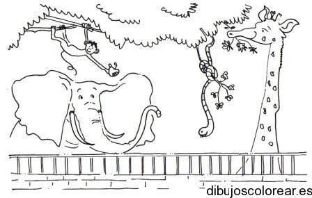 Clipart resolution 448*285 - zoo dibujo para colorear clipart ...