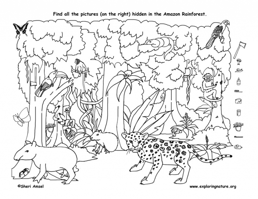 Download Rainforest Coloring Pages Printable Clipart Amazon - Amazon-coloring-pages