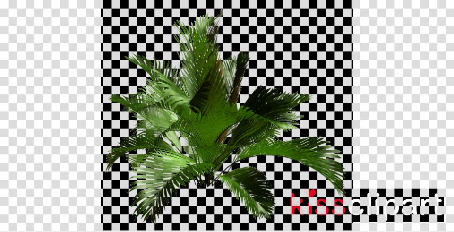 Plant Tree Leaf Transparent Png Image Clipart Free Download