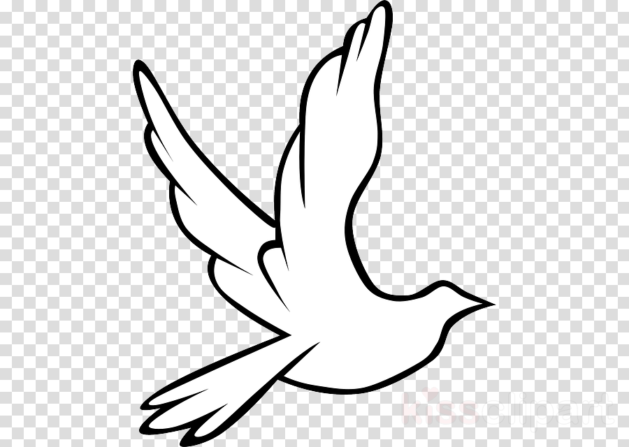 Drawing Bird White Transparent Png Image Clipart Free Download
